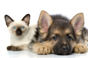 Cat_and_dog_iStock_000004270502XSmall